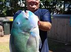 Gladstone man finds fishing treasures inside 60-yo trophy
