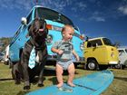 Kombi Show and Shine at the Mooloolaba State School. May 29, 2016. Dozer the dog, a 4 year old neapolitan mastiff with Boedy Delfino, 11 months, in front a 1975 type 2 campervan.
