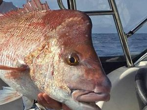 Snapper are biting and here's how to catch them