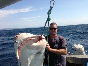 "Shark hunter warns next shark attack ""three weeks away"""