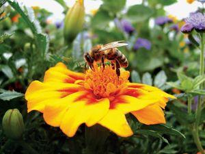 Gardening: Celebrate World Environment Day on Sunday