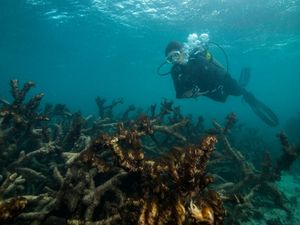 Reef shame: 'The smell of millions of rotting animals'