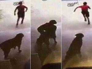 Boy sneaks a hug from dog