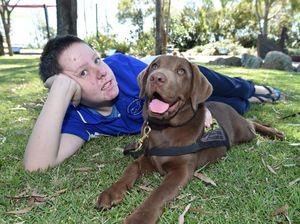 Training assistance dog poisoned by backyard plant