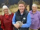Healthy Ageing names new bilby