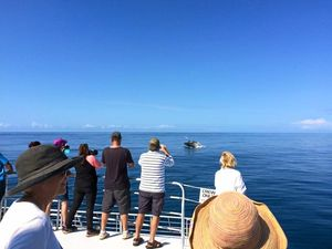 WHALING HELLO: Passengers spot a humpback on Wednesday on a Lady Musgrave Experience tour.