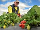 Queensland Farmers' Federation attracts suitable workers to horticulture industry.
