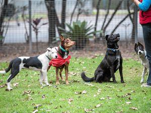 Tag team teaches dog skills