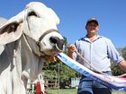 The 1,030kg bull, Viva Mario took out the Grand Champion Bull title.