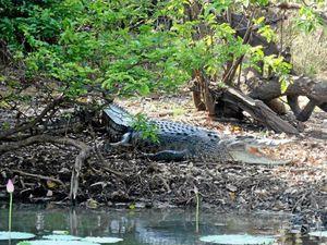 "WARNING: ""13 foot"" crocodile spotted on banks of Boyne"