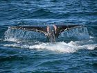 THE whales are at play in Coolum this week and were spotted by locals close to surfers