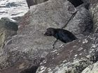 This little fella was seen on the North Wall at Ballina.