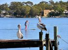 Noosa Biosphere Reserve Foundation five projects explained