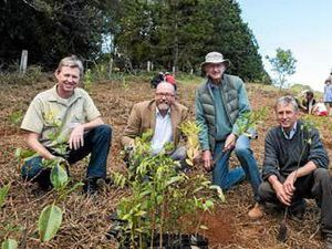 Rainforest restoration celebrating 30 years at Rocky Creek Dam