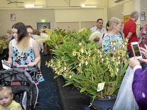 Lockyer Valley set to go green