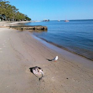 Something is fishy at Bongaree - Caboolture News