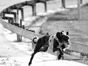 82% support Australia-wide greyhound racing ban