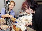 Yvonne Kettley talks with Cyndy Hopkins of Maryborough about crystals at the Hervey Bay Gem and Mineral Club's annual gem show on Sunday.
