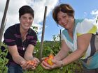 Mother and daughter team Michelle McKenzie and Mary-Ann Refalo have built a huge market garden to supply the Greater Whitsunday Farmer's Markets.