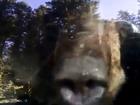 Bear screen capture