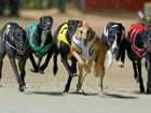 DAYS NUMBERED: Greyhound racing could be a thing of the past in NSW from July next year.