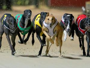 Greyhound ban to have wide Tweed impact