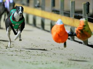 Greyhound ban is the 'start of a slippery slope'