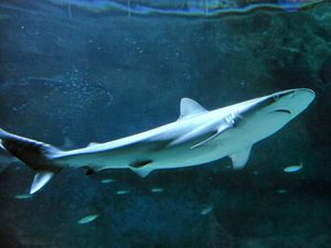 Shark fins seized during raid, fisheries investigate