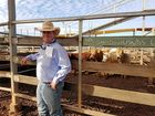 THE numbers may not have shown it, but there's been strong consistency at the Roma Saleyards thanks to the recent coldsnap in the Maranoa.