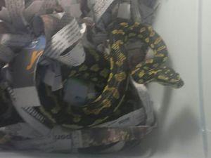 Snake on a train! Police nab slippery rail passenger
