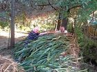 Noosa community group acts for National Tree Day