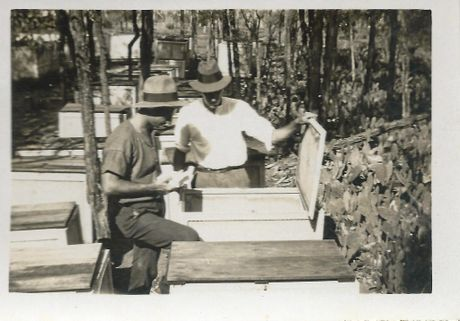 When Alan Dodd (right) travelled overseas in search of insects to control prickly pear, he relinquished control of the experimental research station at Chinchilla to Alan R. Taylor left) seen here inspecting collection boxes.