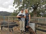 """EXTENDED FAMILY: Greg and Alison Cromwell near the pig run, which has access for free-range. They depend on their daughters' input, and """"amazing"""" support from two full-time and other staff."""