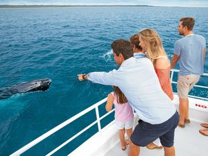 OCEAN GIANT: Hervey Bay will be the temporary home for thousands of humpback whales this season.