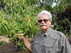 Weather creates havoc for NT mango growers