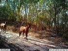 A decade after brumbies were removed from Fraser Island ...