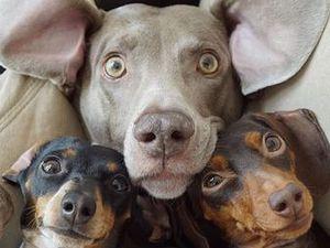 13 animal Instagrams guaranteed to make you laugh