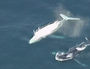 Second white whale spotted off coast.