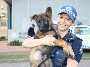 Burpengary Police's pawfect new recruit