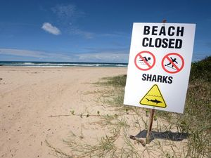 Why the shark barrier at Lighthouse Beach has stalled