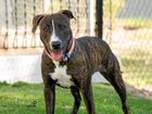 There are more than 30 dogs who need good homes in the Gladstone region