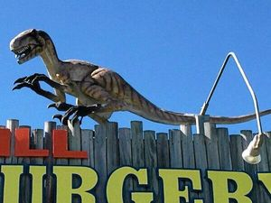 Raptor on the run after stolen from vet surgery