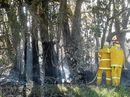 RFS responds to Palmers Island grass fire