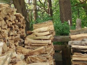 Wood you see it? Spot the cat among the kindling