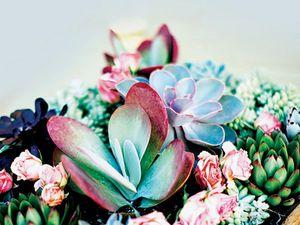 Gardening: Get creative with succulents' huge range