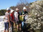 Noosa wildflower walks set to be blooming good