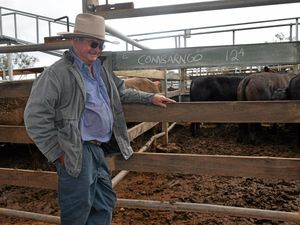 Roma saleyards show off for Governor-General visit