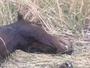 Crazed horse mutilator on the loose in Queensland