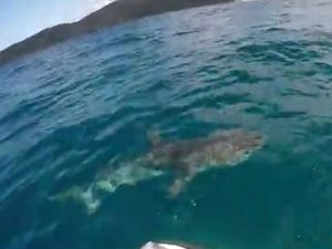 'Magnificent' shark hooked off Noosa