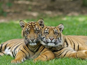 WIN a Gold Coast holiday with tigers and thrill rides